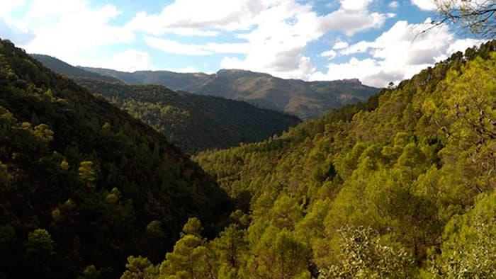 Valle-del-río-Borosa