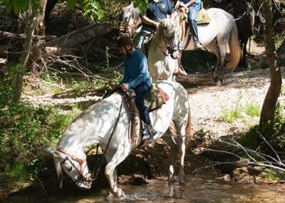 Paseos a caballo en Cazorla