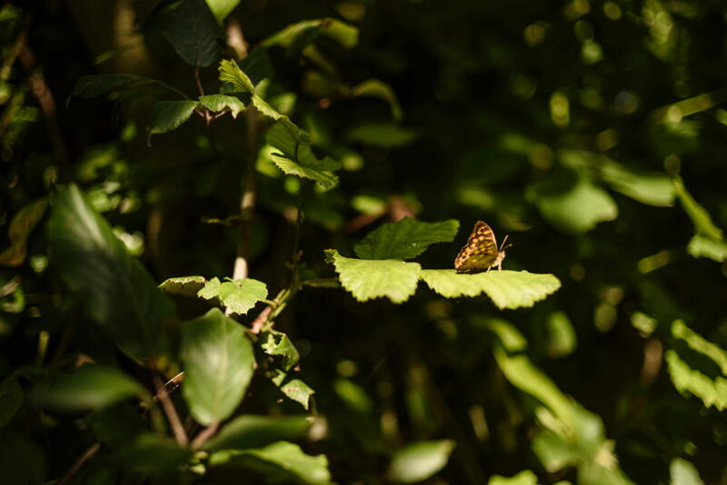 Fotografía en la naturaleza nivel intermedio